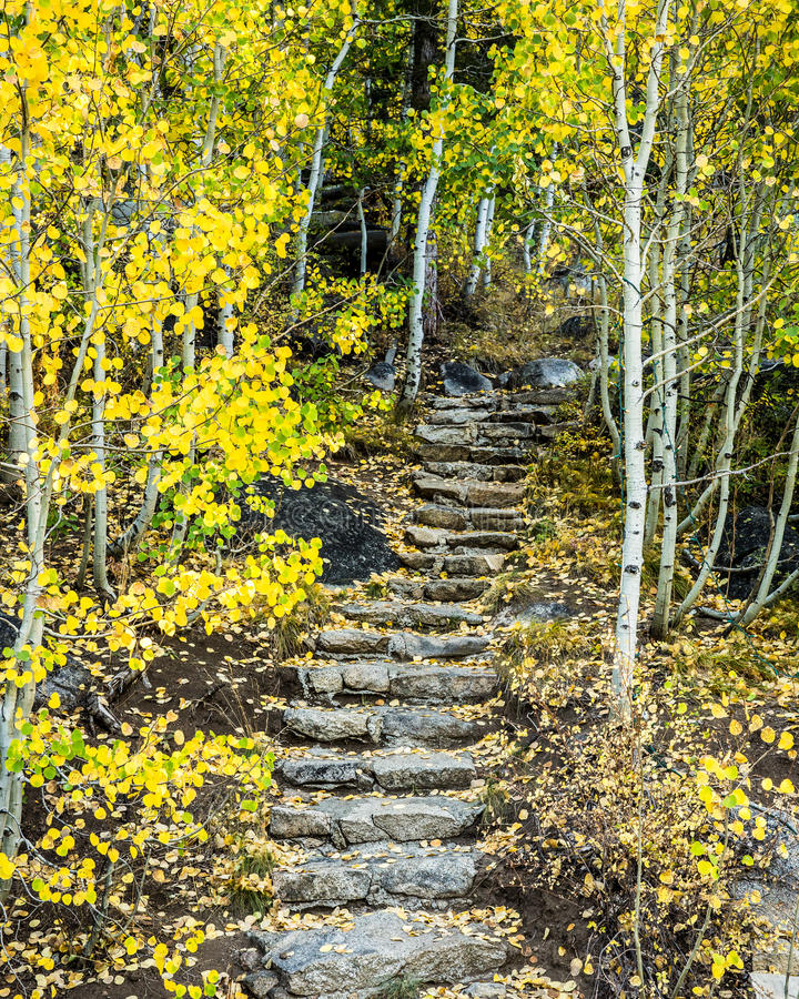 Hope Valley California. This attractive trail in Hope Valley off of Highway 88 in California winds up through a beautiful grove of aspen trees royalty free stock image