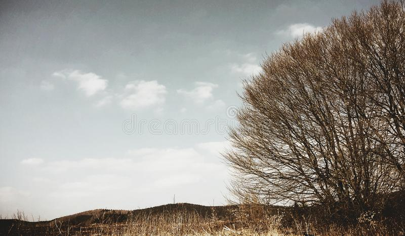 Hopefull. Trees in coutryside royalty free stock images