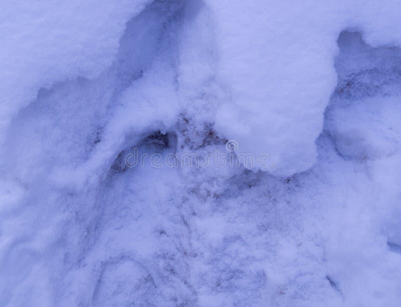 hopen van de achtergrond van het sneeuwclose-up seizoengebonden royalty-vrije stock foto's
