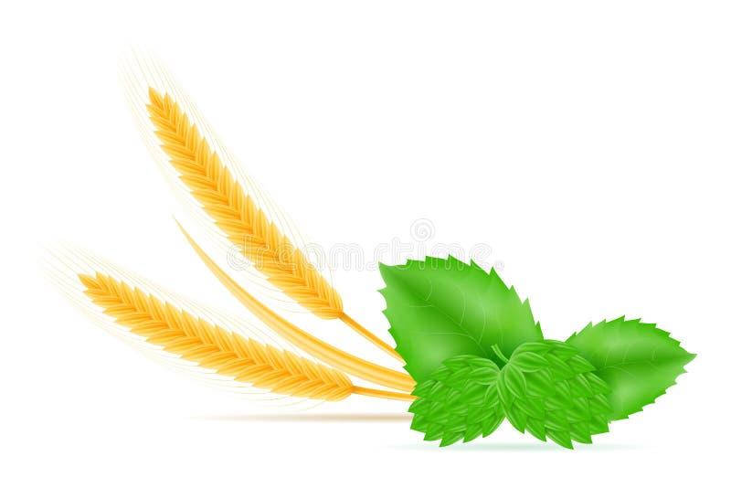 Hopfen und Weizenbestandteile für die Herstellung der Biervektorillustration vektor abbildung