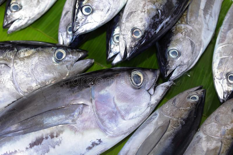 Hoppbagge- och Yellowfintonfisk royaltyfri foto