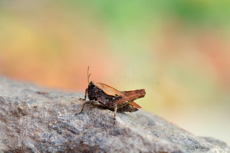 A Hopper Royalty Free Stock Photography