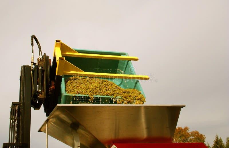 hopper Riesling winogrono po cenach dumpingowych obrazy royalty free