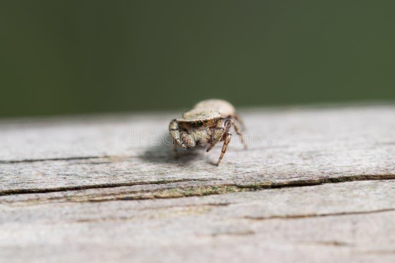 Hoppspindel på den wood platsen arkivfoto