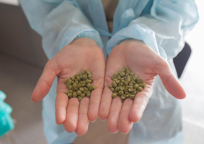 Hops granulated production and storage of beer factory warehouse industry drinks order hands royalty free stock photos