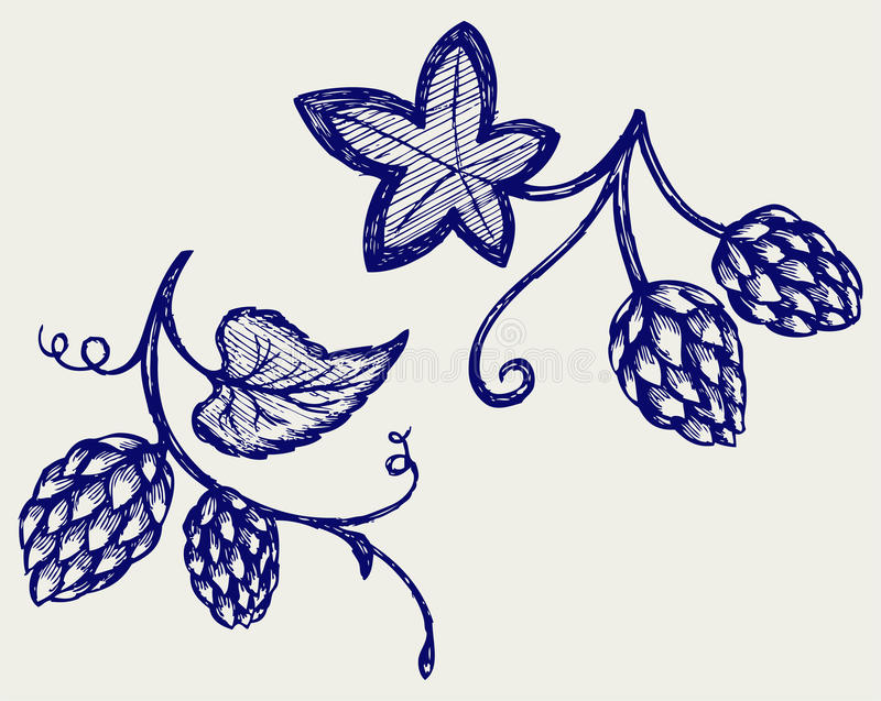 Hops with leaves. Doodle style. Vector stock illustration