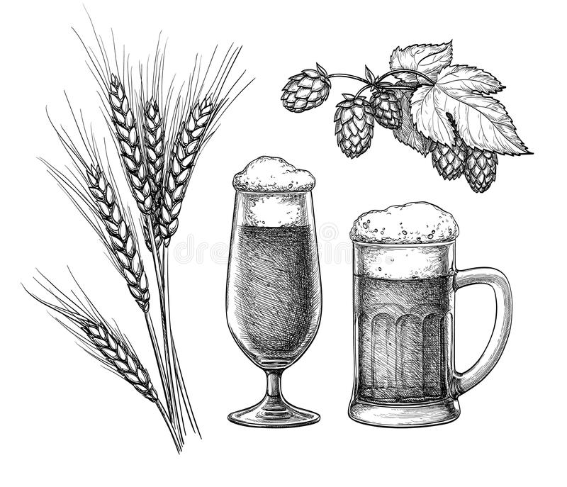 Hops, malt, beer glass and beer mug. Isolated on white background. Hand drawn vector illustration. Retro style royalty free illustration