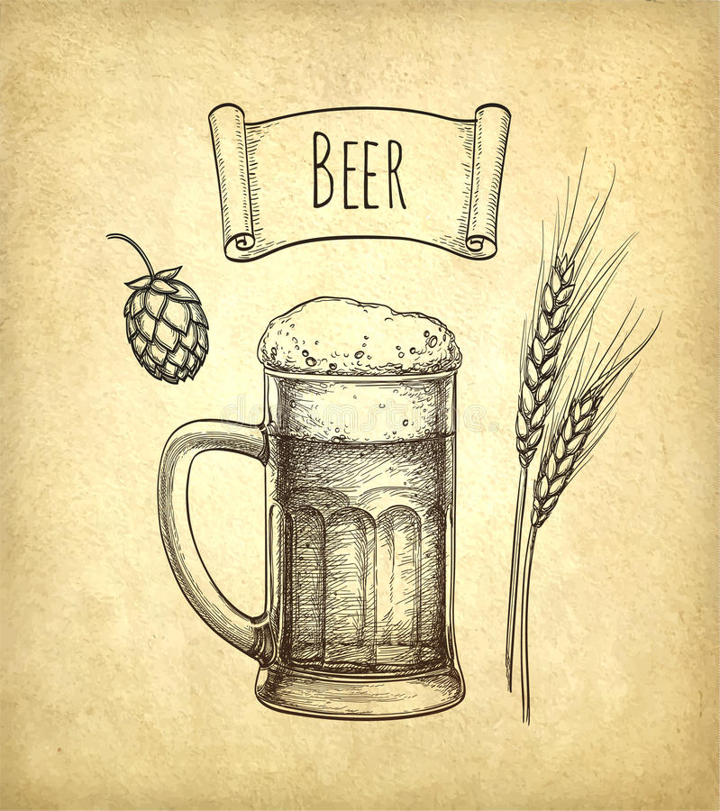 Hops, malt and beer mug. On old paper background. Hand drawn vector illustration. Retro style royalty free illustration