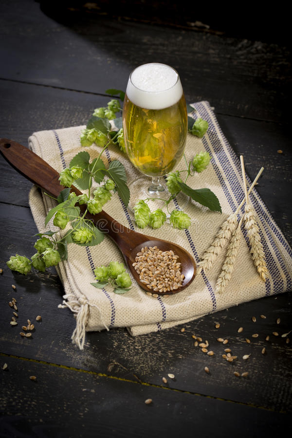 Hops and malt seeds and spikes jug full with beer on cloth napkin royalty free stock photography