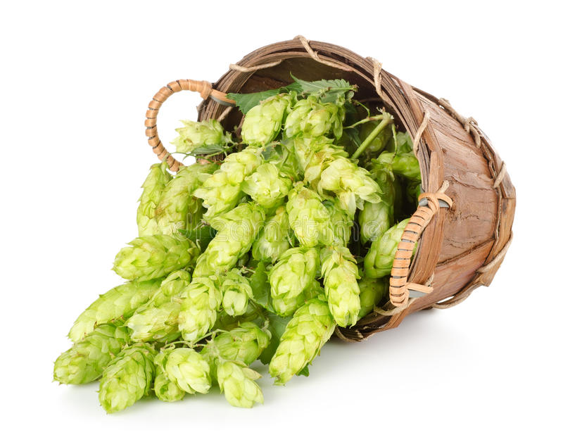 Download Hops in a wooden basket stock photo. Image of plant, ingredient - 26448848