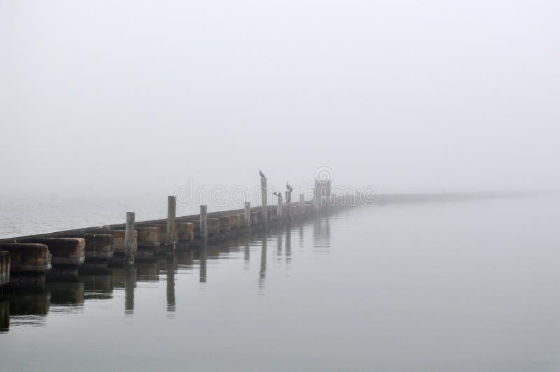 Hora de la comida de niebla imagen de archivo