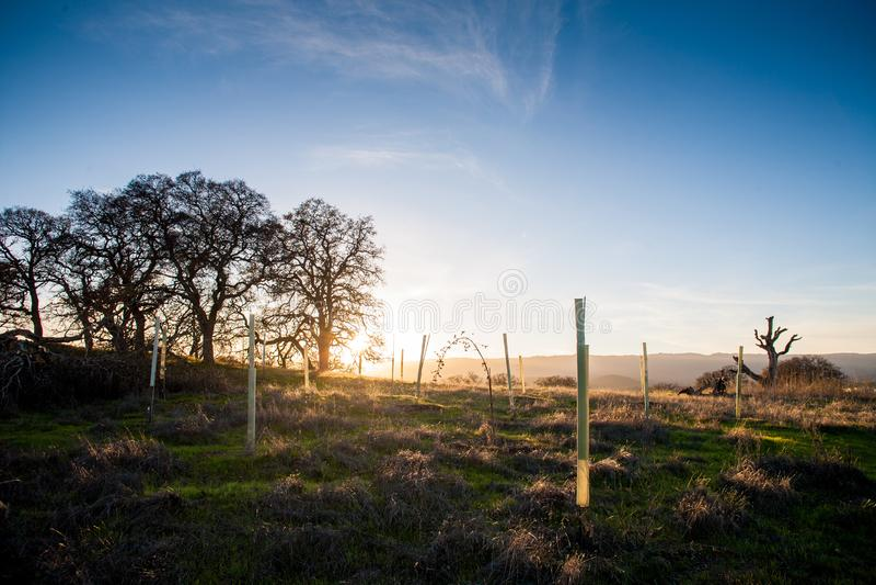 A hora dourada, o sol está ajustando-se no campo perto de Stanford fotografia de stock royalty free