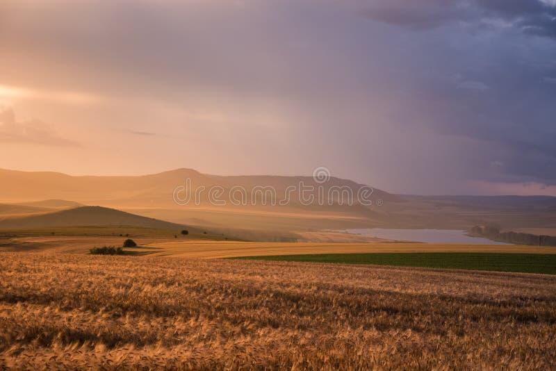 Hora dourada sobre campos de trigo após um dia tormentoso imagens de stock royalty free
