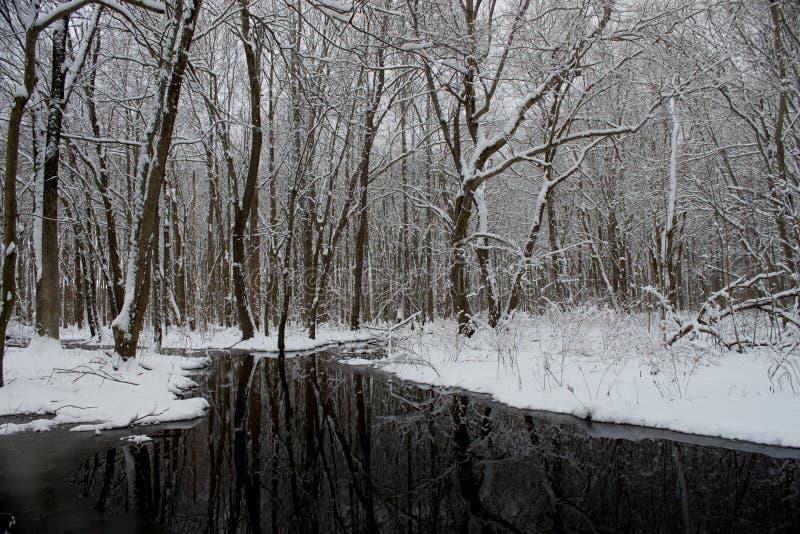 Horaire d'hiver dans la forêt photo libre de droits