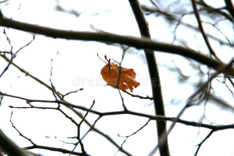 Horaire d'hiver, un en air photos libres de droits