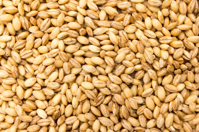 Barley cereal grain. Closeup of grains, background use. stock photos