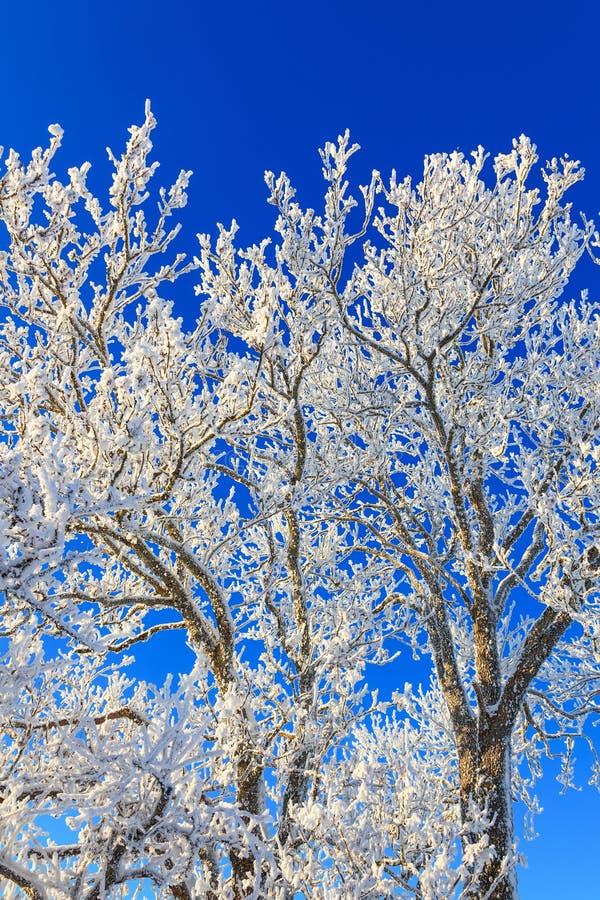 Horfroast drzewo zdjęcie stock