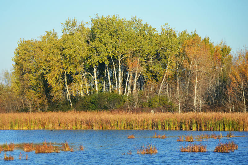 Horicon Marsh. Landscape of trees and marshlands at Horicon Marsh in Horicon, Wisconsin stock photography