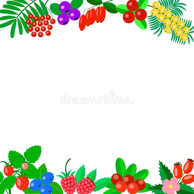 Horisontalbakgrund som dekoreras med bär på en vit bakgrund arkivbild