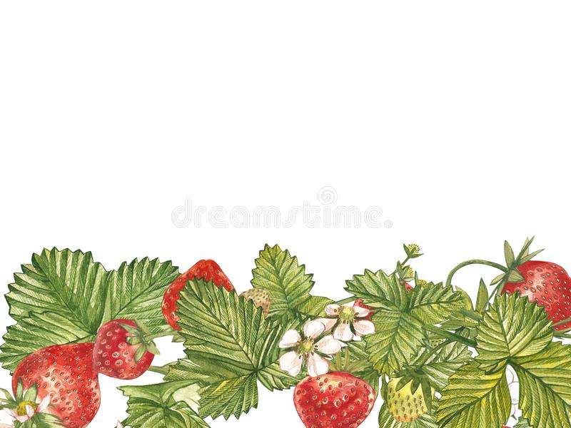 Horisontalbaner med den mogna röda bärjordgubben på vit bakgrund Planlägg för att förpacka, naturliga skönhetsmedel, hälsa stock illustrationer