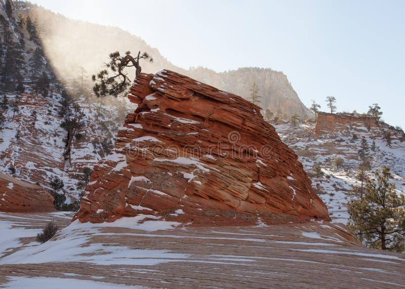 Horisontalbilden av en singelböjelse sörjer trädet som växer från ett sandstenbildande med täckt snö, vaggar och vind blåst snö arkivbilder