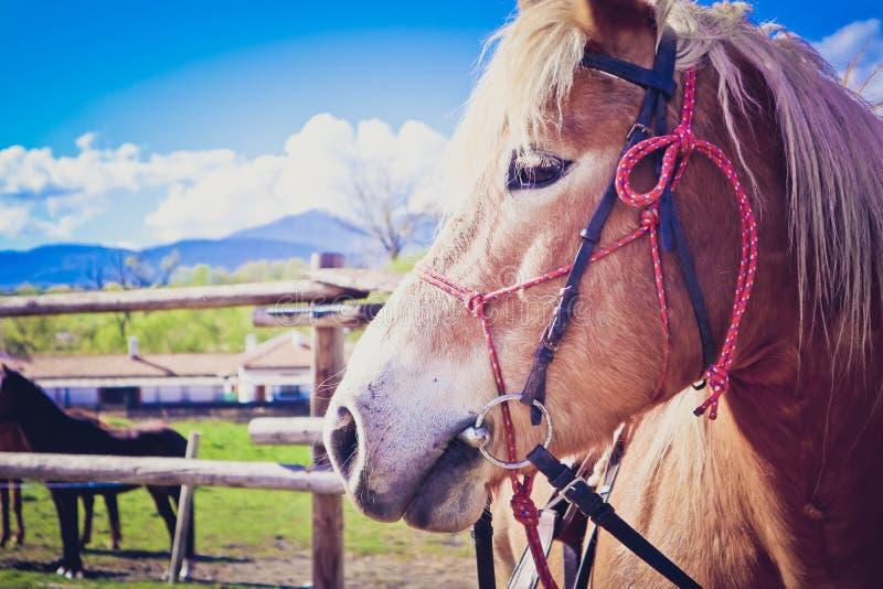 Horisontalfotoet visar den härliga älskvärda vit hästen för brunt och royaltyfri fotografi