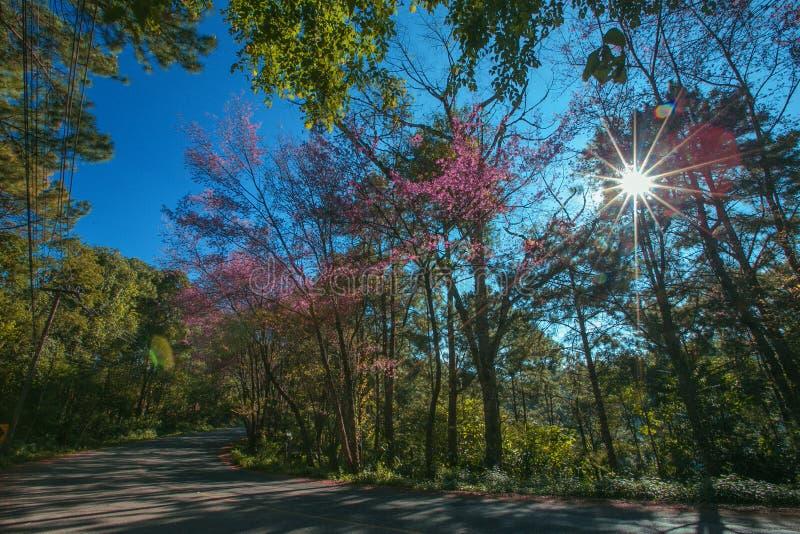 Horisontalhärlig bysikt med träd och blommor arkivfoton
