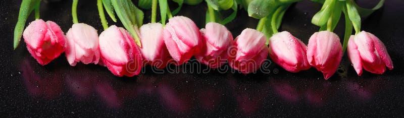 Horisontalpanorama med rosa tulpan royaltyfria foton