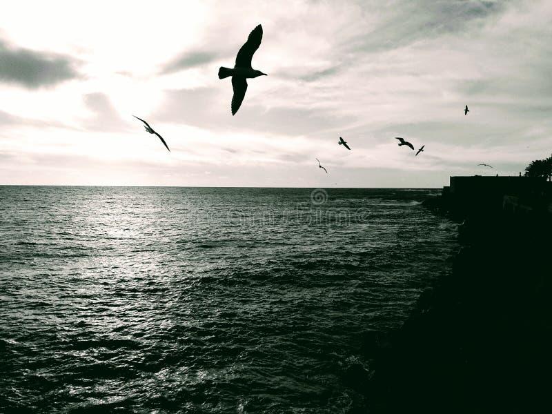 horizon stock afbeeldingen