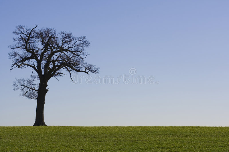 Horizon 2 d'arbre photos stock