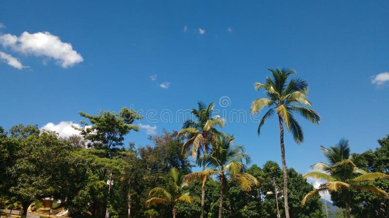 Horizon d'été photographie stock