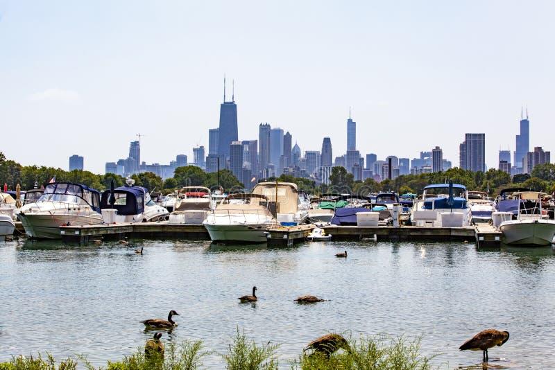 Horizon de Chicago au delà de port de Diversey images libres de droits