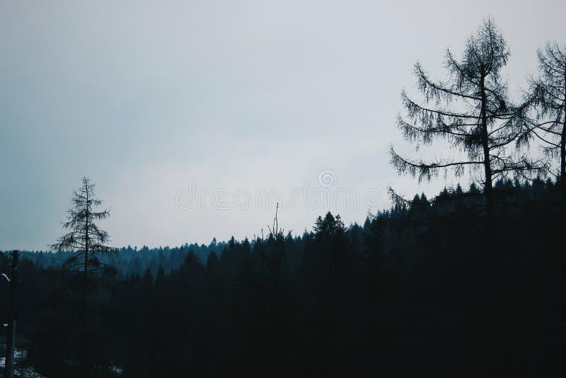 Horizon de forêt en montagnes images libres de droits