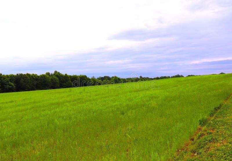 Horizon die Purpere Wolken en Groen de Lentegras tonen royalty-vrije stock foto