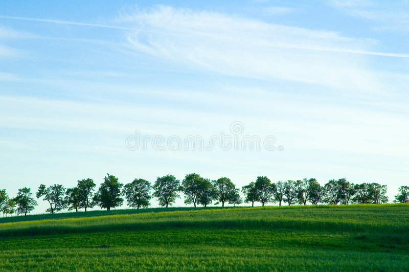 horizon drzewa fotografia royalty free