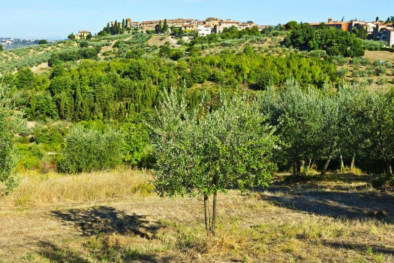 Horizon et Olive Trees de ville photos libres de droits