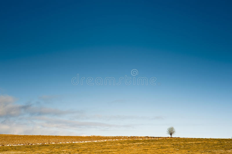 Download Horizon With A Tree Royalty Free Stock Photos - Image: 12489928