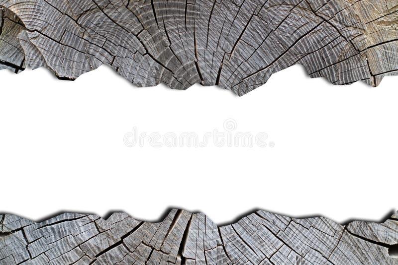 Horizontaal kader op een witte die achtergrond met een boom, achtergrond, textuur, oppervlakte wordt omzoomd stock afbeelding