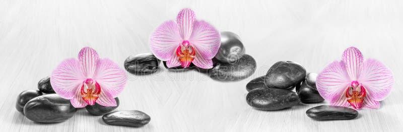 Horizontaal panorama met roze orchideeën stock fotografie