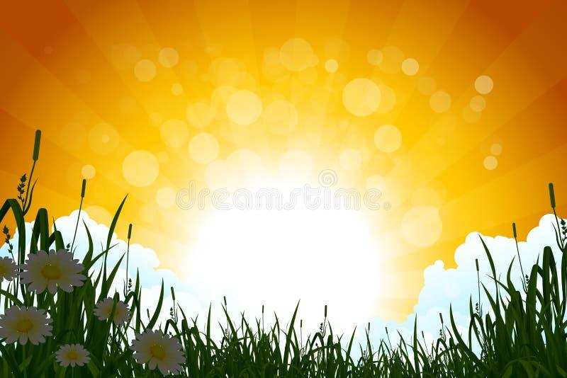 Horizontal étonnant de lever de soleil avec l'herbe illustration de vecteur