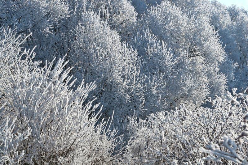 Horizontal 3 de l'hiver image stock