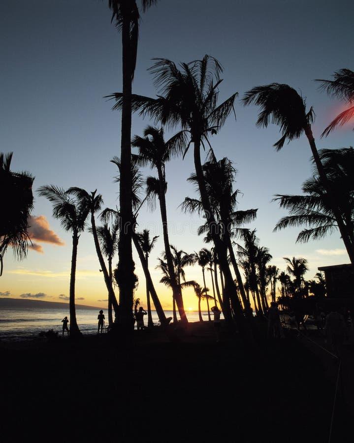 Download Horizontal image stock. Image du tropical, ciel, arbre, coconuts - 83777