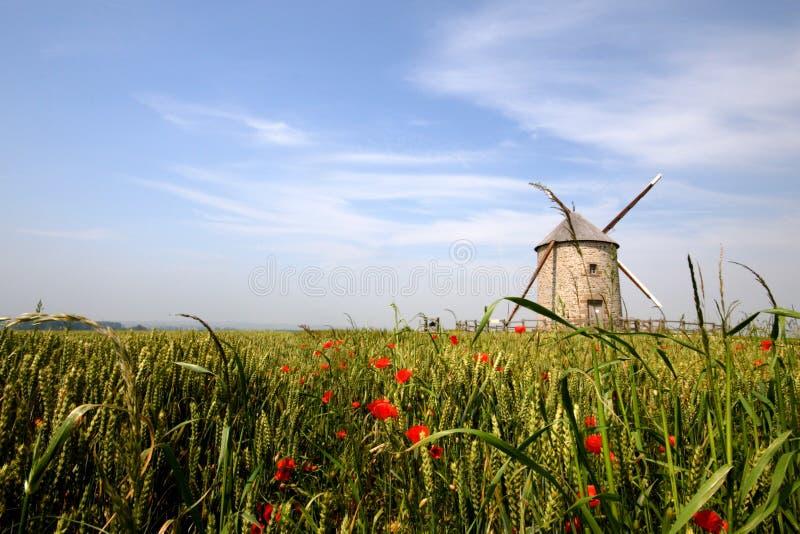 Download Horizontal photo stock. Image du vert, france, pavot, zone - 8661924