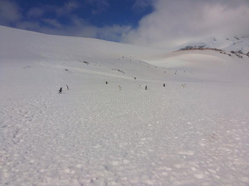 Horizontal antarctique photos libres de droits