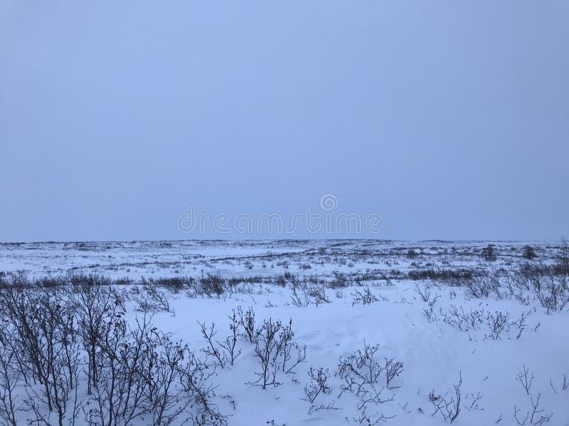 Horizontal arctique de toundra photo stock