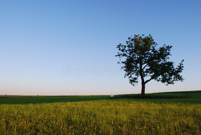Horizontal au printemps image stock