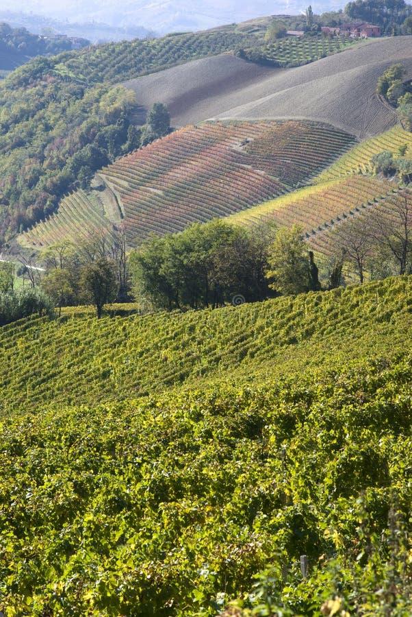 Horizontal automnal des vignes et des côtes dans Langhe image stock