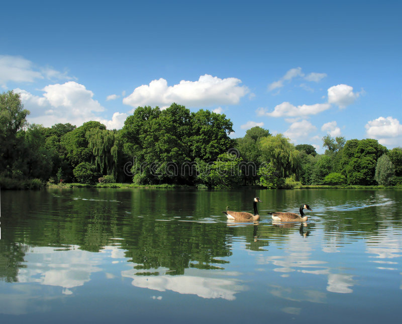 Horizontal avec des canards photos stock