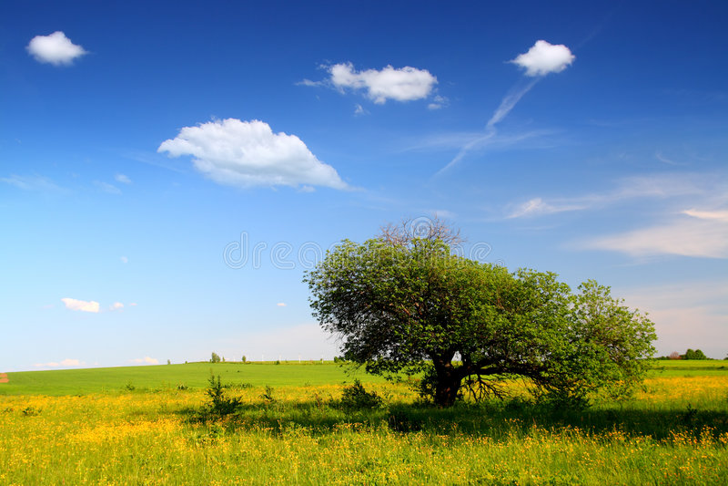Horizontal avec l'arbre étrange photographie stock