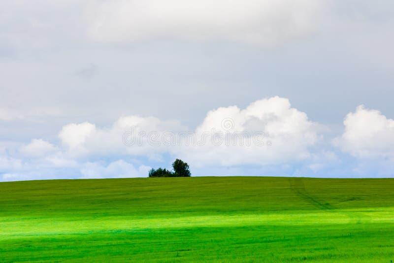 Horizontal avec l'herbe verte et le ciel bleu Nuages blancs dans le ciel photos stock